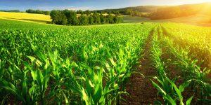 六次産業・次世代農業対策支援